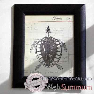 Tableau Squelette Tortue Objet De Curiosite  TA035